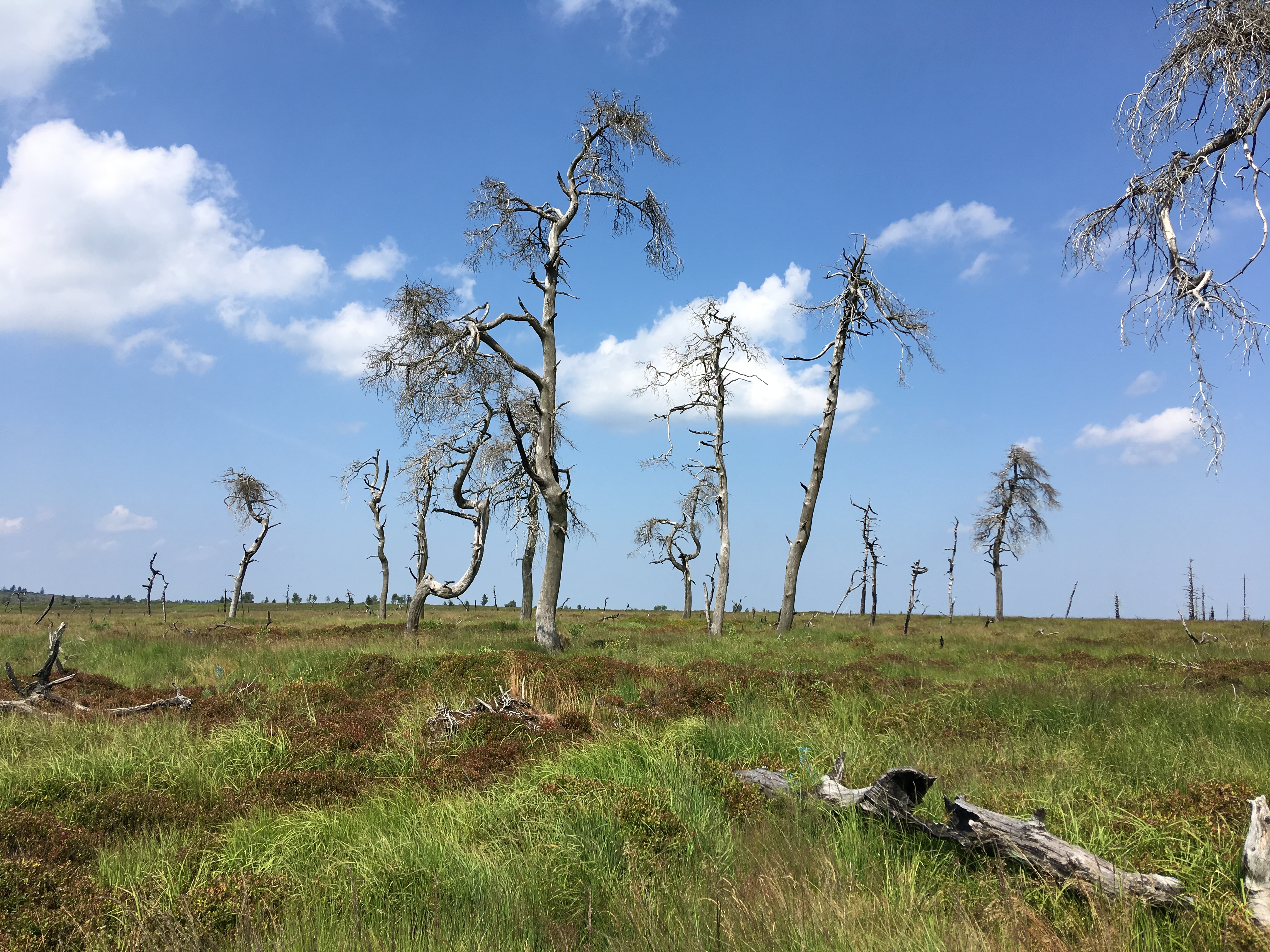 Das Hohe Venn – Wandern zu den toten Bäumen von Noir Flohay